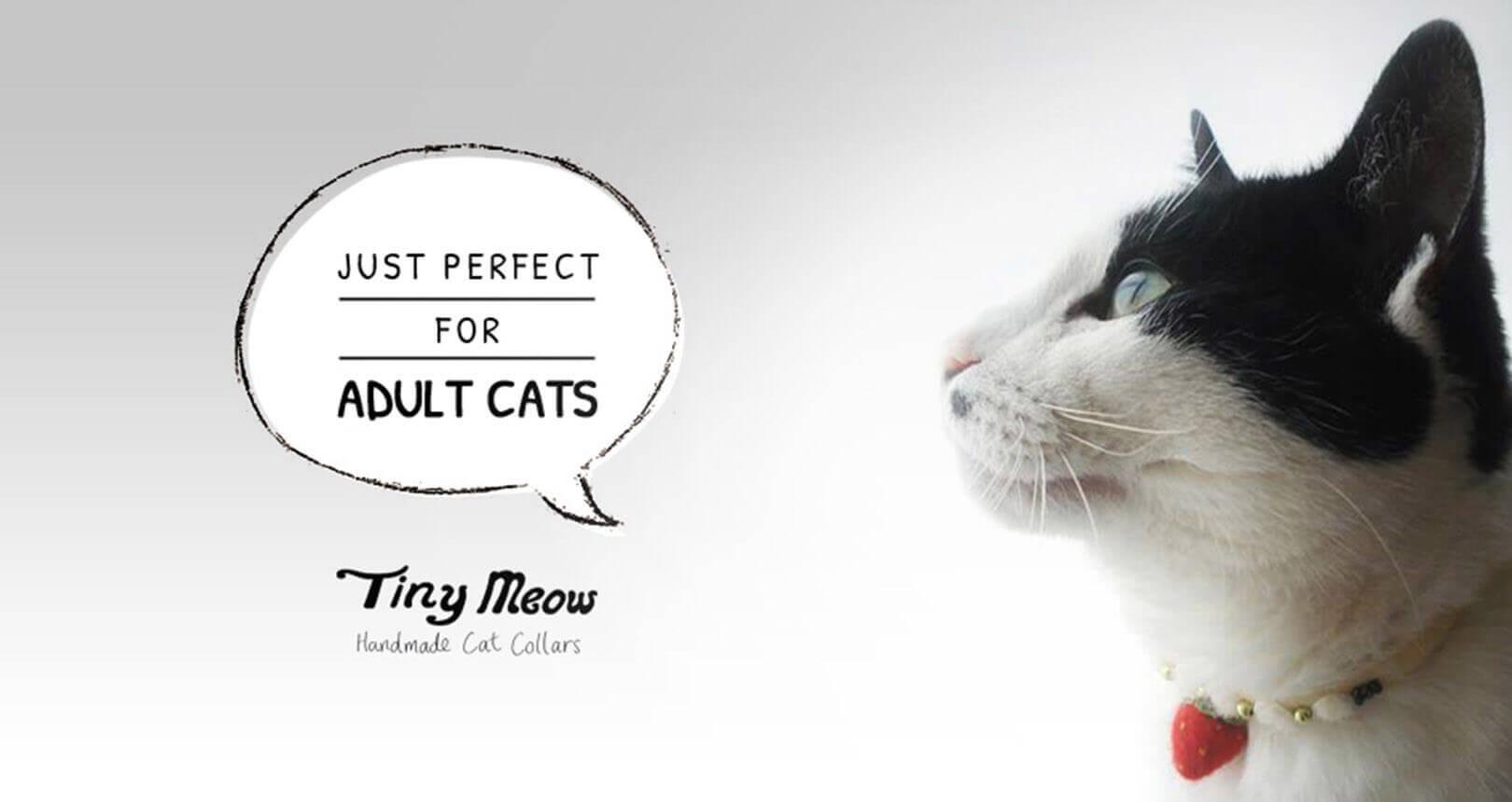 Tiny Meow branding